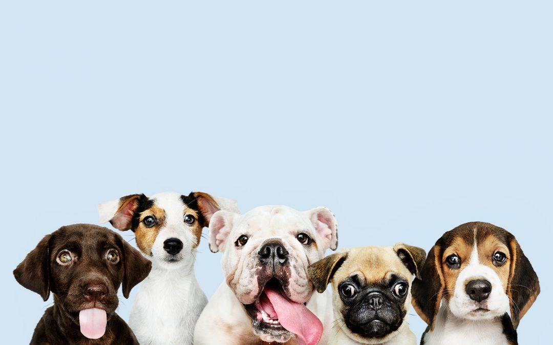 ANIMALES DE SOPORTE EMOCIONAL